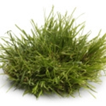 Large Grass Tufts Med Green (12 count)